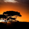 New Forest Sunset