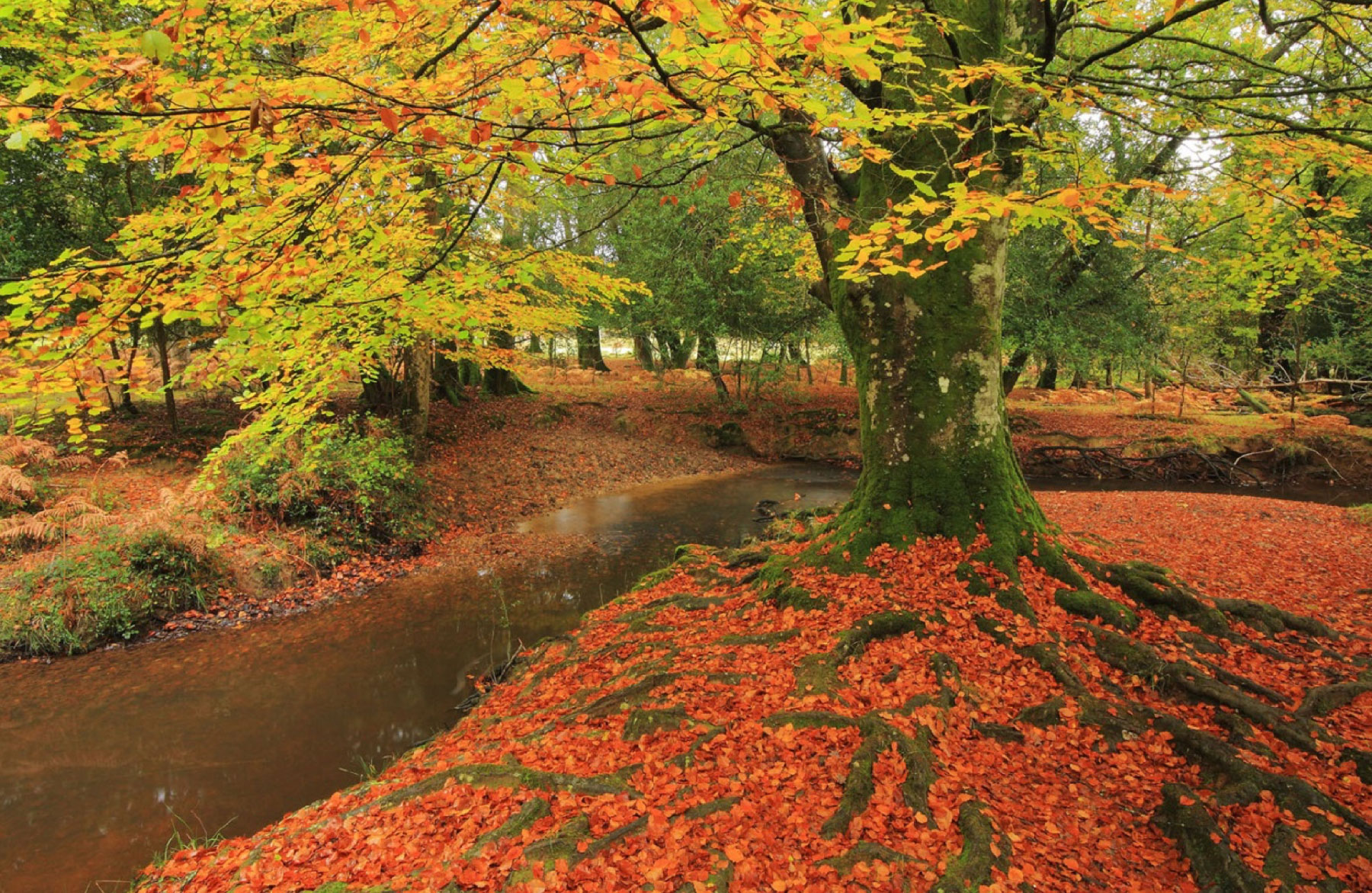 10 Things To Do In Autumn In The New Forest Gnf Members Area